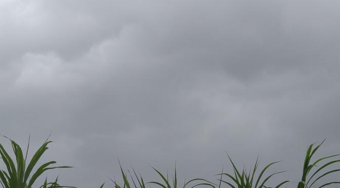 My Tropical Savanna Climate
